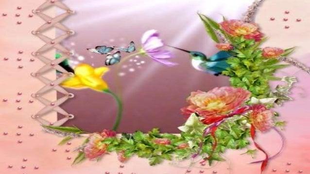 Doces Passarinhos Pela manhã eles chegam no meu jardim e vêm dar bom-dia para mim... Ah, meus doces passarinhos, teus cari...