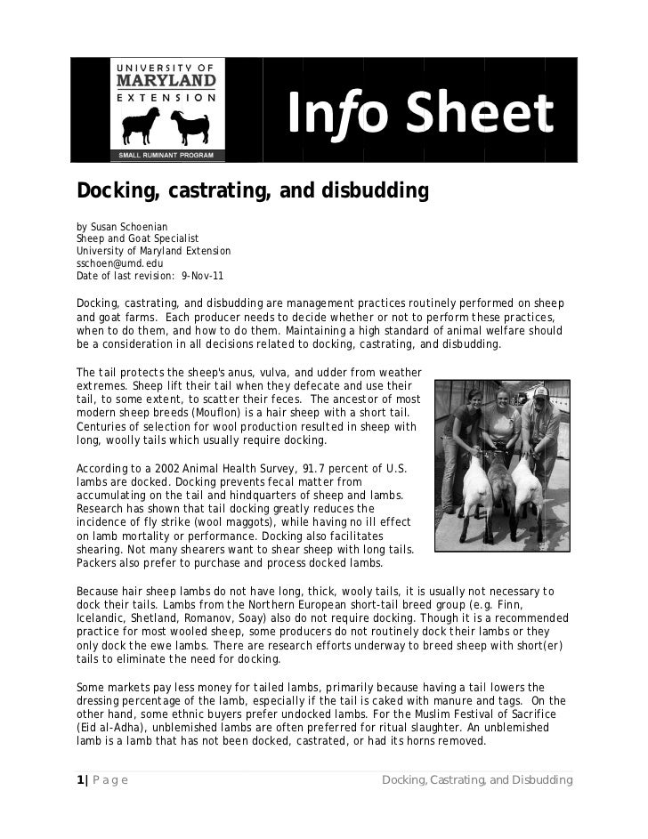 Docking, castrating, and disbudding
