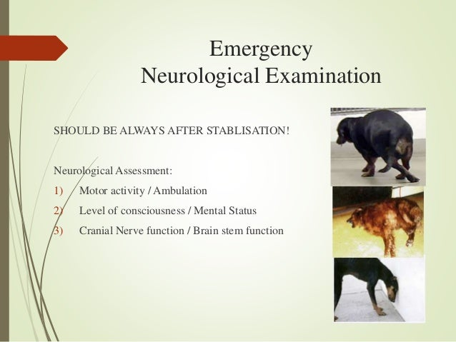 an approach to neurological emergencies in dogs
