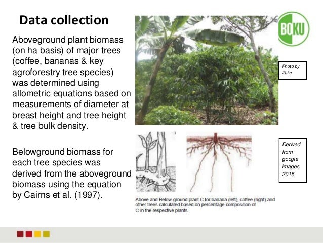 Carbon Under Coffee Based Agroforestry