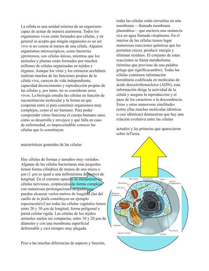 virus y bacteria 22