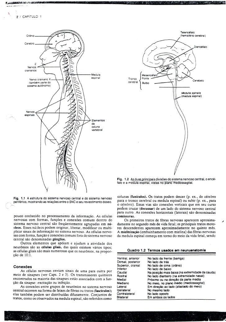 Neurologia - doenças vasculares cerebrais