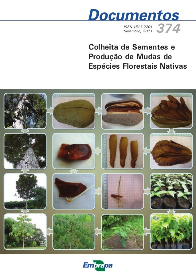 ISSN 1517-2201 Setembro, 2011 374 Colheita de Sementes e Produção de Mudas de Espécies Florestais Nativas