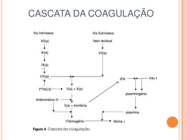 maladie de von willebrand pdf