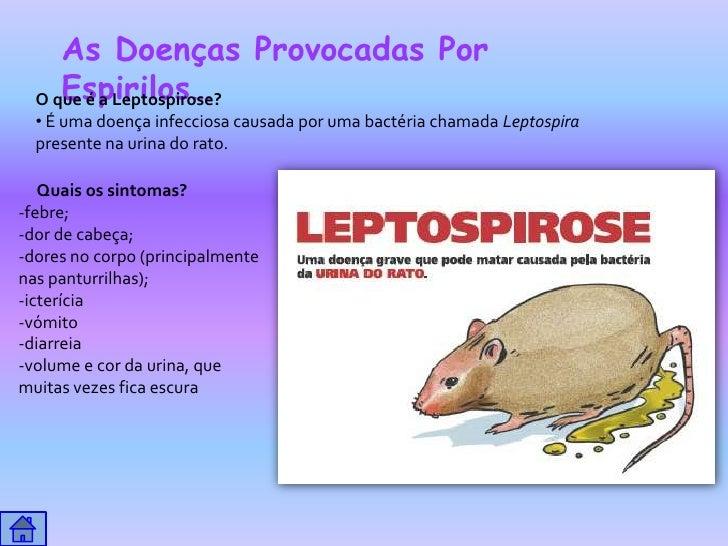 As Doenças Provocadas Por     Espirilos…  O que é a Leptospirose?  • É uma doença infecciosa causada por uma bactéria cham...