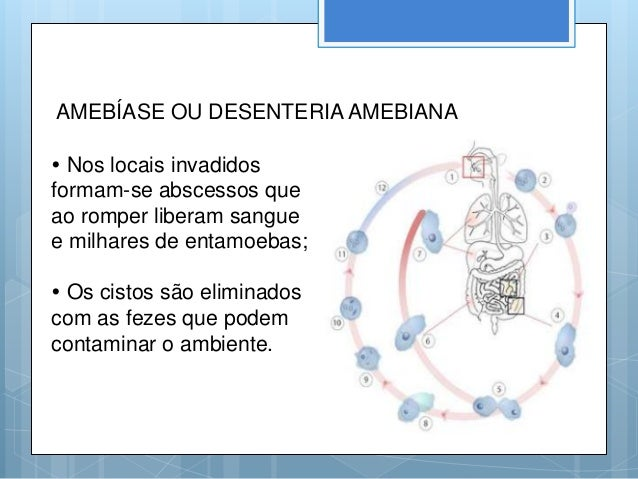 Doenças causadas por protozoários Slide 3