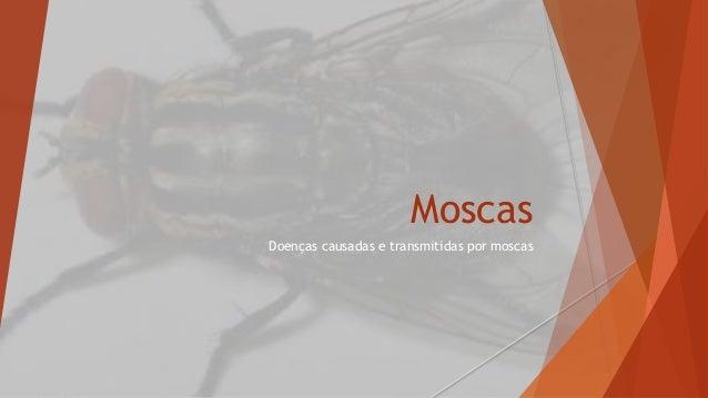 Moscas  Doenças causadas e transmitidas por moscas