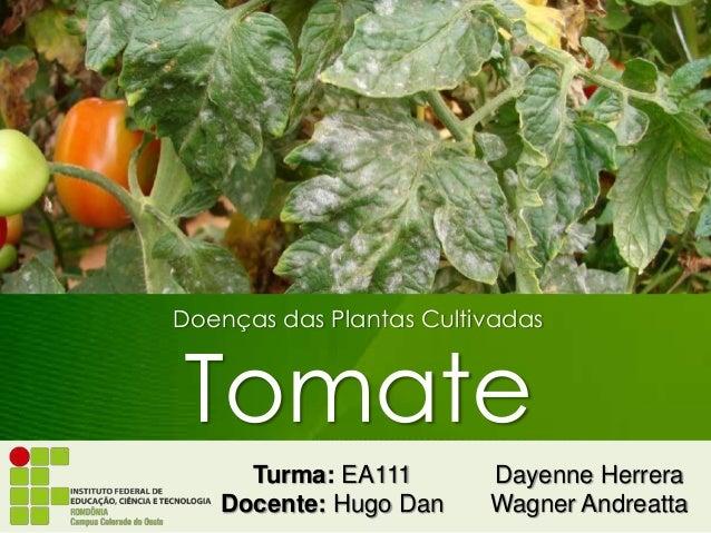 Doenças das Plantas Cultivadas Tomate Dayenne Herrera Wagner Andreatta Turma: EA111 Docente: Hugo Dan