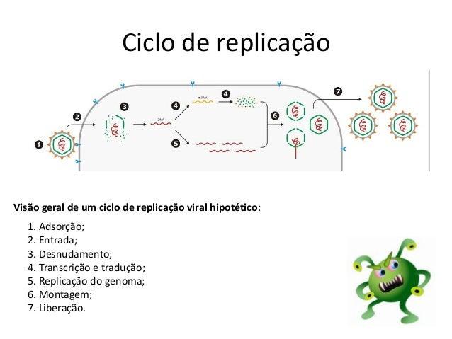 Ciclo de replicação Visão geral de um ciclo de replicação viral hipotético: 1. Adsorção; 2. Entrada; 3. Desnudamento; 4. T...