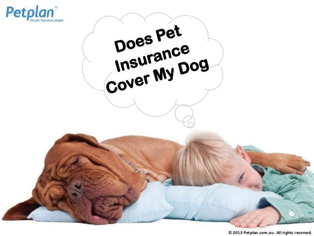 © 2013 Petplan.com.au . All rights reserved.