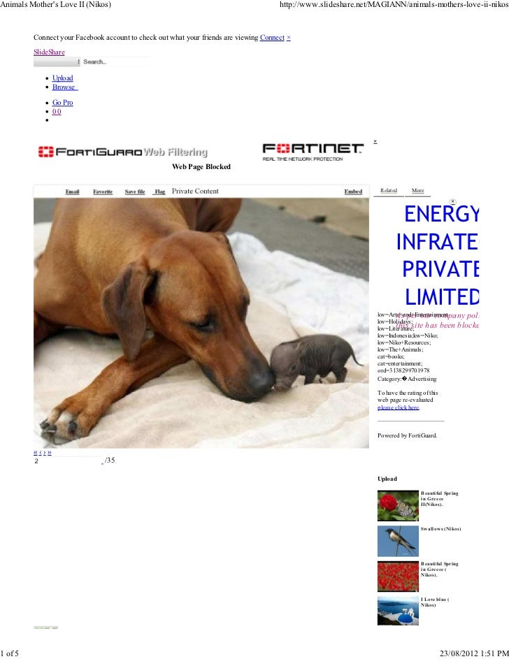 Animals Mothers Love II (Nikos)                                                       http://www.slideshare.net/MAGIANN/an...