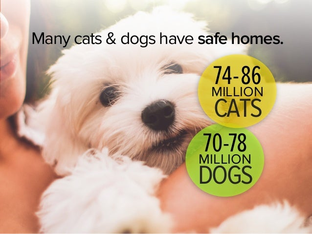 How Many Cats And Dogs Die Each Year