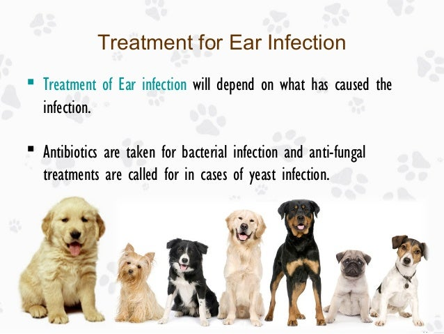 Antibiotics Used For Dog Ear Infections