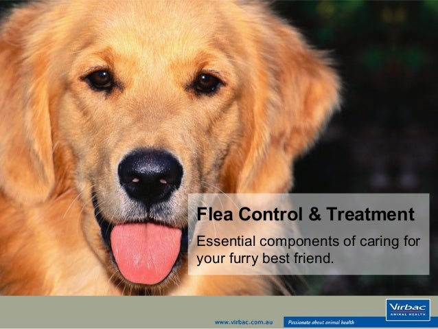 Flea Control & Treatment  Essential components of caring for  your furry best friend.