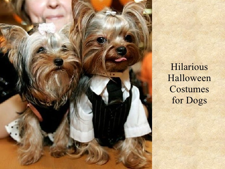 Hilarious Halloween Costumes for Dogs