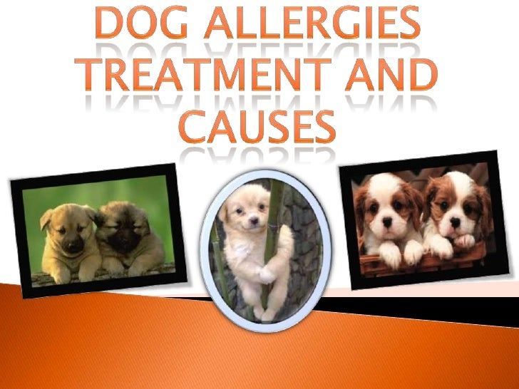 Dog Allergies Treatment and Causes<br />