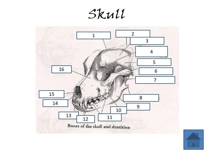Dog Anatomy Review