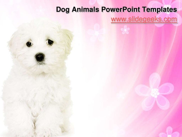 dog animals power point templates