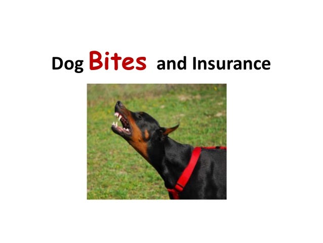 Dog Bites and Insurance