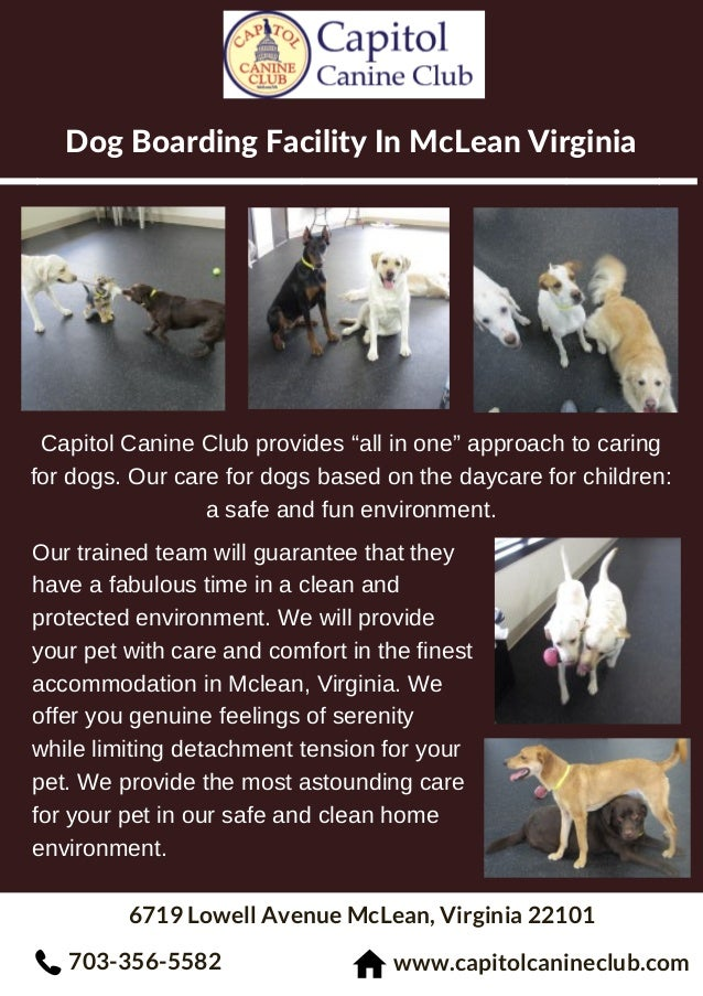 """Dog Boarding Facility In McLean Virginia 6719 Lowell Avenue McLean, Virginia 22101 Capitol Canine Club provides """"all in on..."""