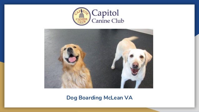 Dog Boarding McLean VA