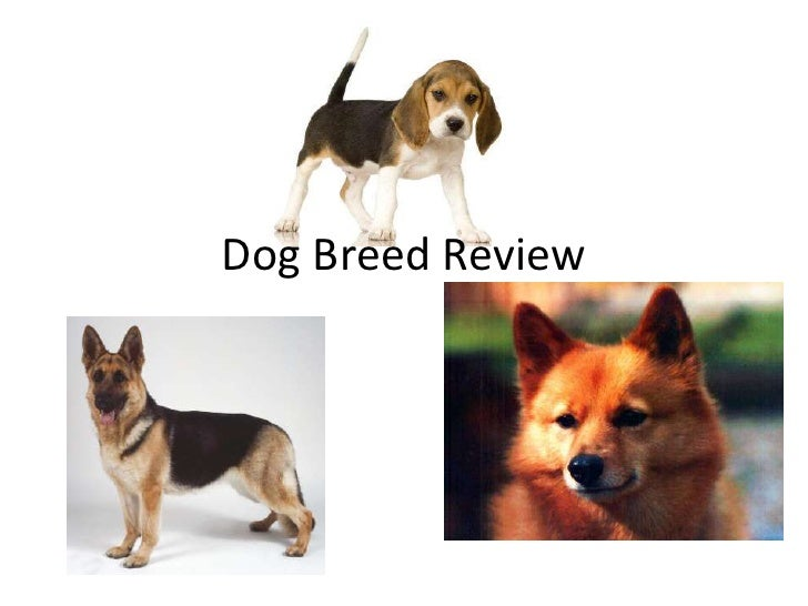 Dog Breed Review<br />