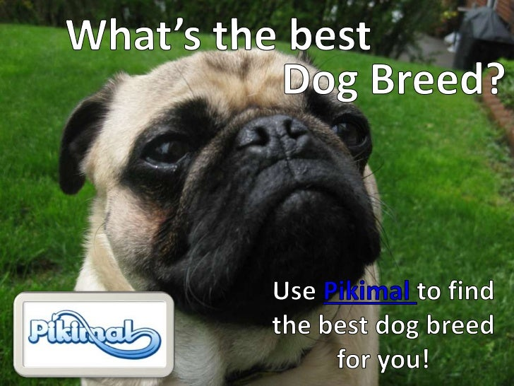 What's the best <br />Dog Breed?<br />Use Pikimal to find the best dog breed for you!<br />