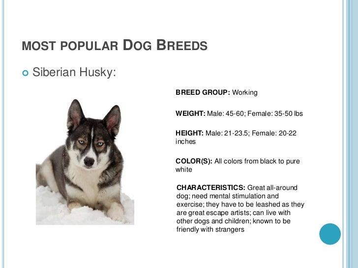 Dog Breeds Most Popular Dog Breeds