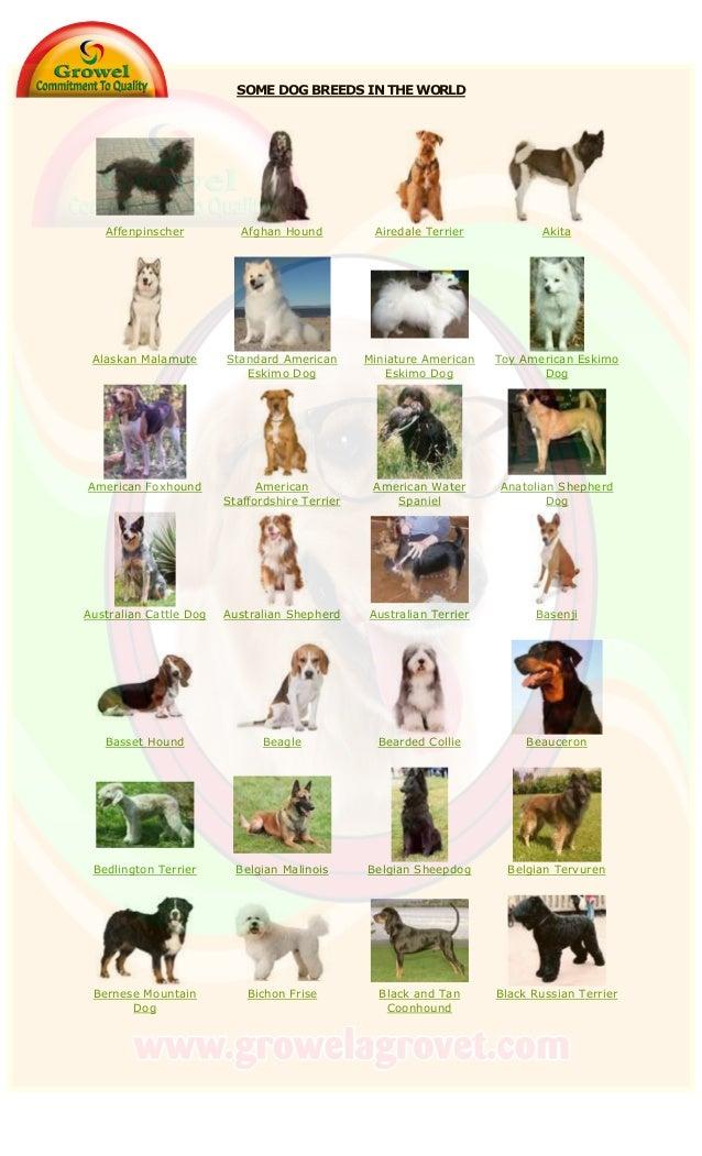 SOME DOG BREEDS IN THE WORLD Affenpinscher Afghan Hound Airedale Terrier Akita Alaskan Malamute Standard American Eskimo D...