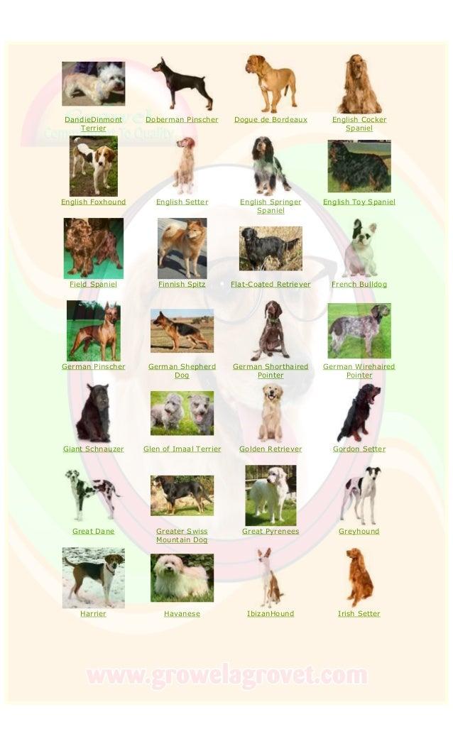 DandieDinmont Terrier Doberman Pinscher Dogue de Bordeaux English Cocker Spaniel English Foxhound English Setter English S...