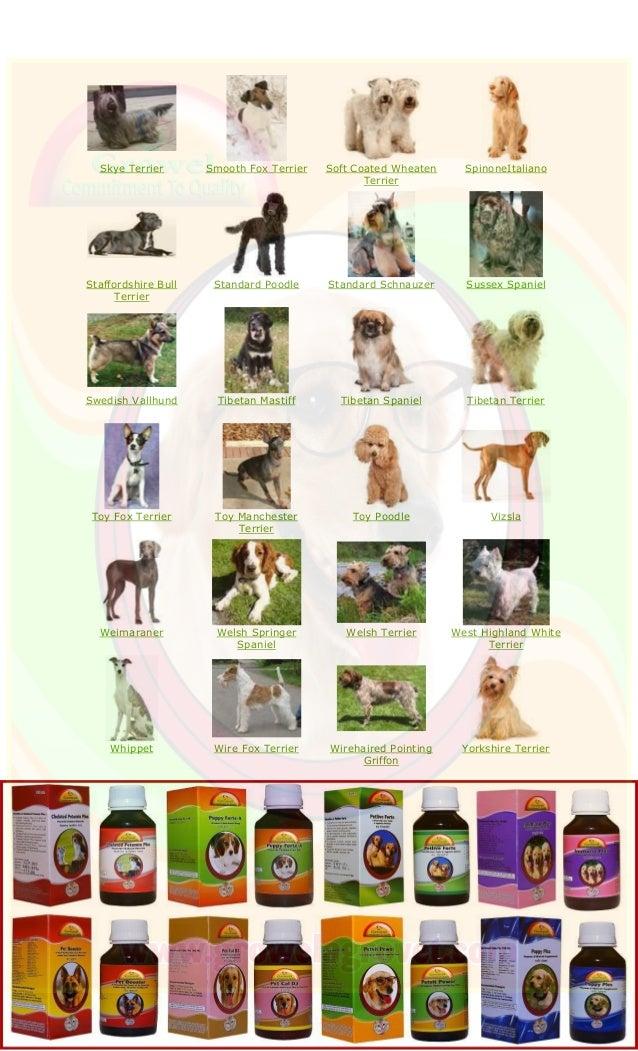 Skye Terrier Smooth Fox Terrier Soft Coated Wheaten Terrier SpinoneItaliano Staffordshire Bull Terrier Standard Poodle Sta...