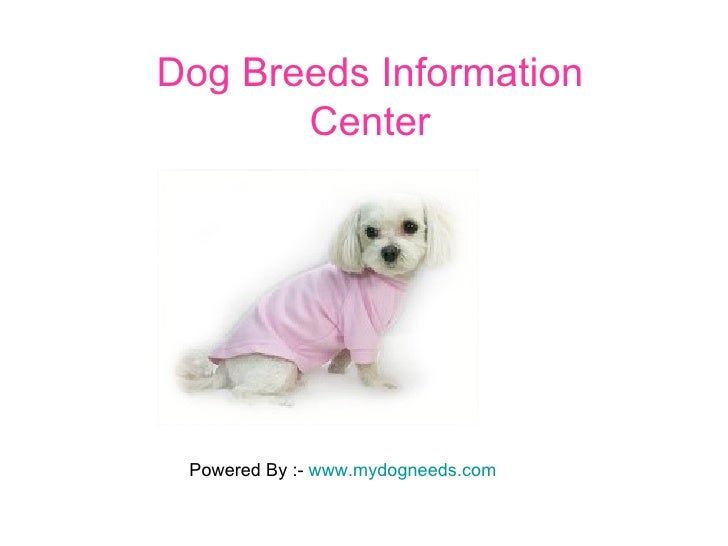 Dog Breeds Information Center Powered By :-  www.mydogneeds.com