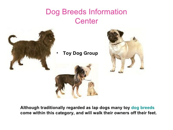 Group Toy Dogs : Dog breeds information