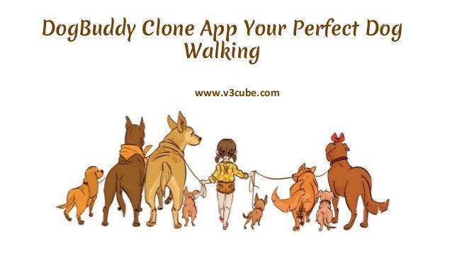 DogBuddy Clone App Your Perfect Dog Walking www.v3cube.com