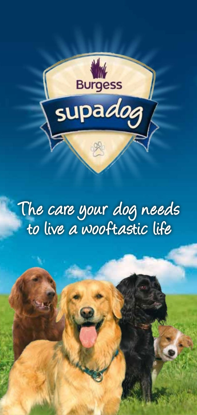The care your dog needs to live a wooftastic life