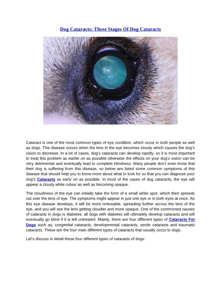 dog cataracts early signs