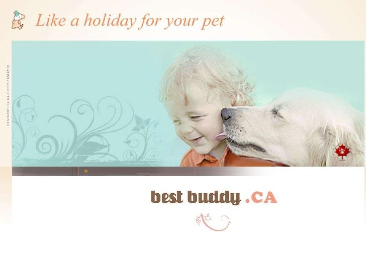 •Safe, fun  Mississauga  doggie daycare