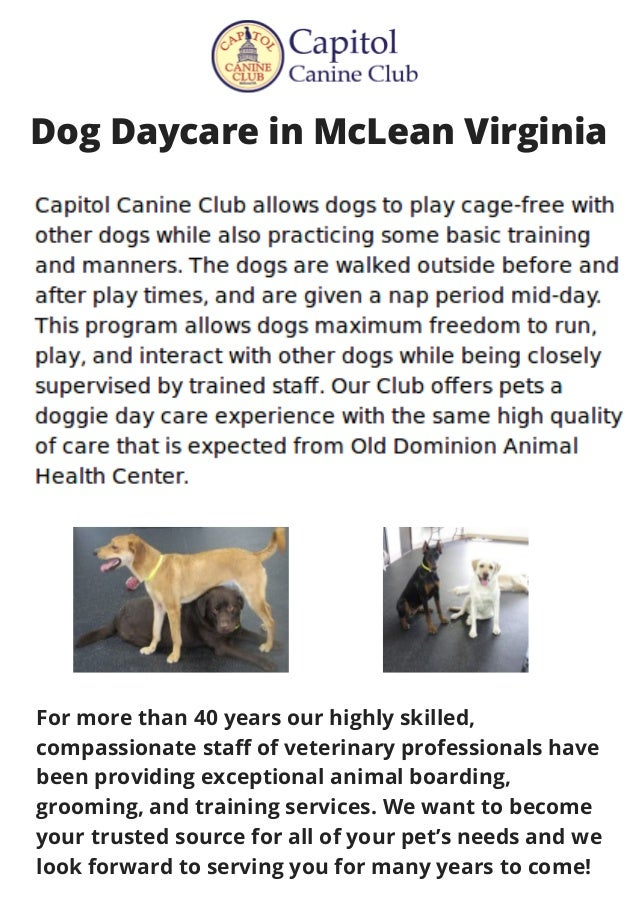 Dog Daycare in McLean Virginia For more than 40 years our highly skilled, compassionate staff of veterinary professionals ...