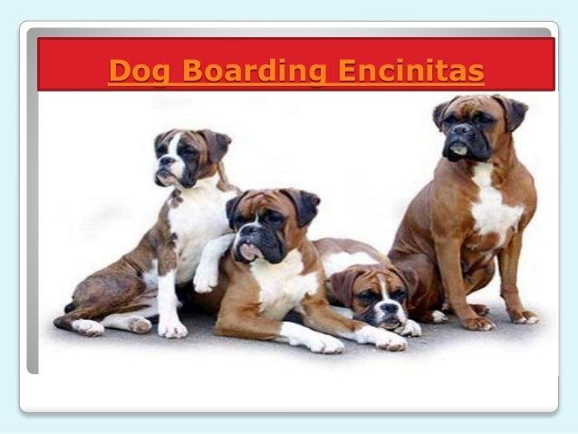 Dog Boarding San Diego