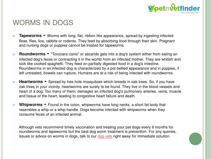 Puppy hookworms contagious