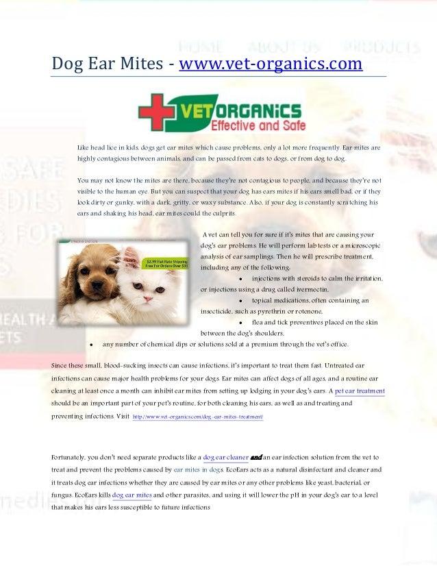 Dog Ear Mites - www vet-organics com