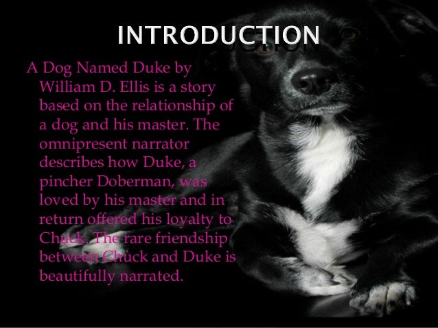 dog named duke Duke is a touching story of love and friendship that will warm the hearts of young and old alike when a former soldier finds himself homeless he decides the best thing to do for his sick dog.