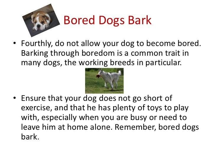 9 bored dogs - Best Way To Stop A Dog From Barking