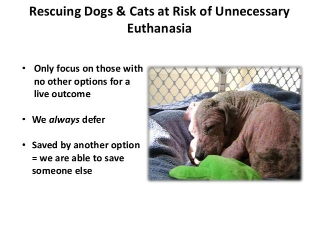 Rescuing Dogs & Cats at Risk of Unnecessary Euthanasia • Only focus on those with no other options for a live outcome • We...