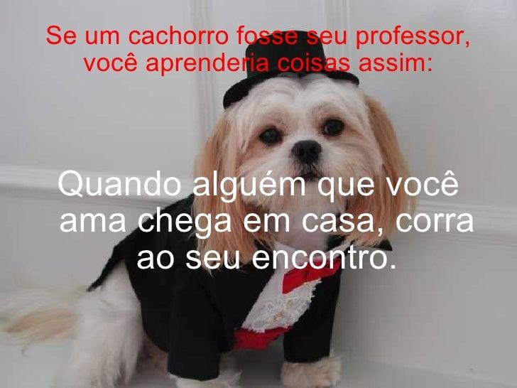 Se um cachorro fosse seu professor, você aprenderia coisas assim: Quando alguém que você ama chega em casa, corra ao seu e...