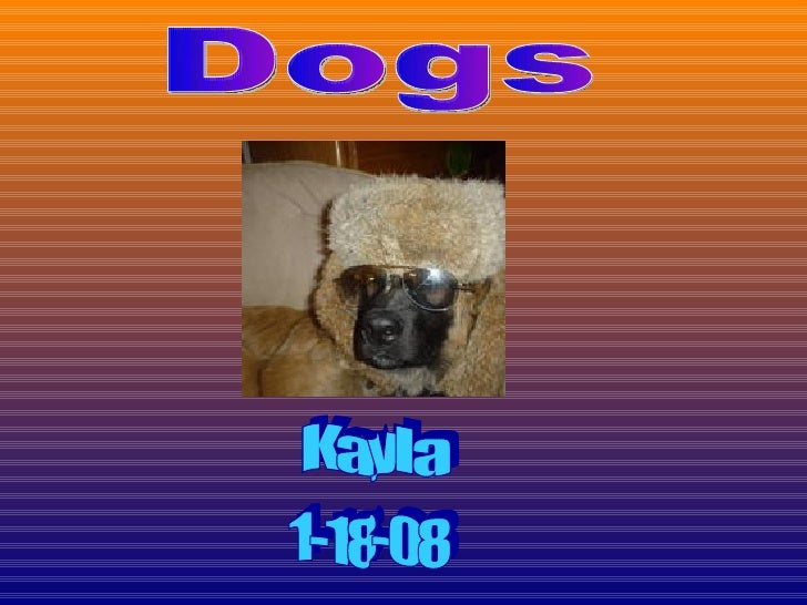 1-18-08 Dogs Kayla
