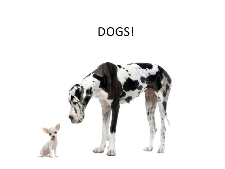 DOGS!