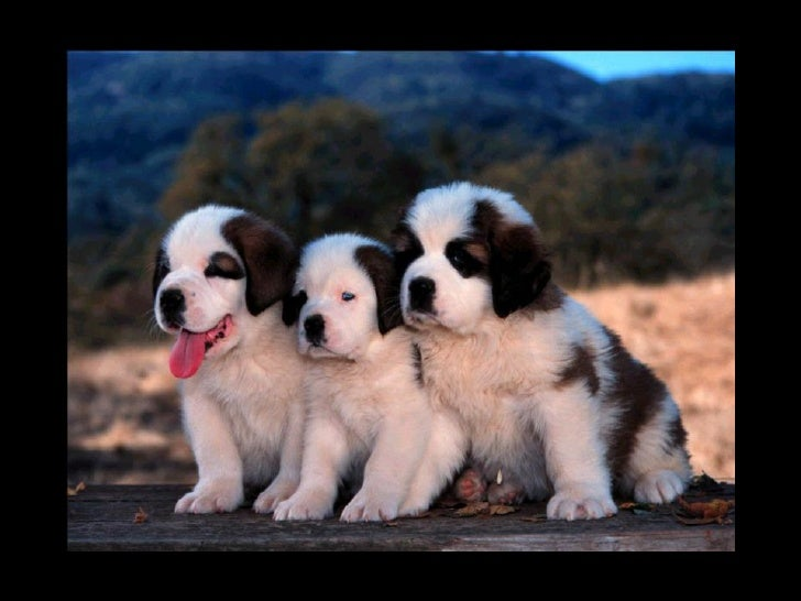 Dogs And Pups Slide 3