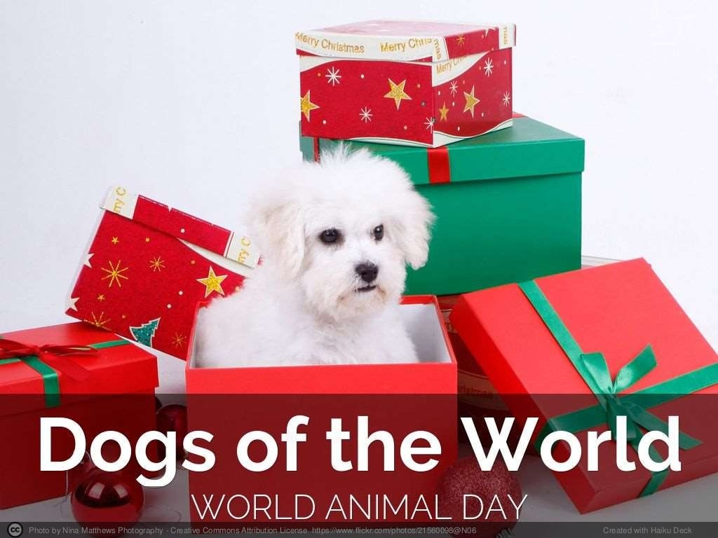 Dogs Of The World - Happy World Animal Day