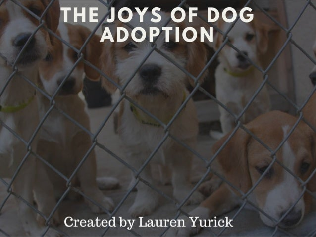 THE JOYS OF DOG ADOPTION  Created by Lauren Yurick